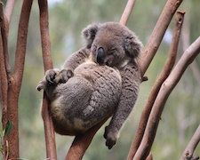 Eloge du sommeil